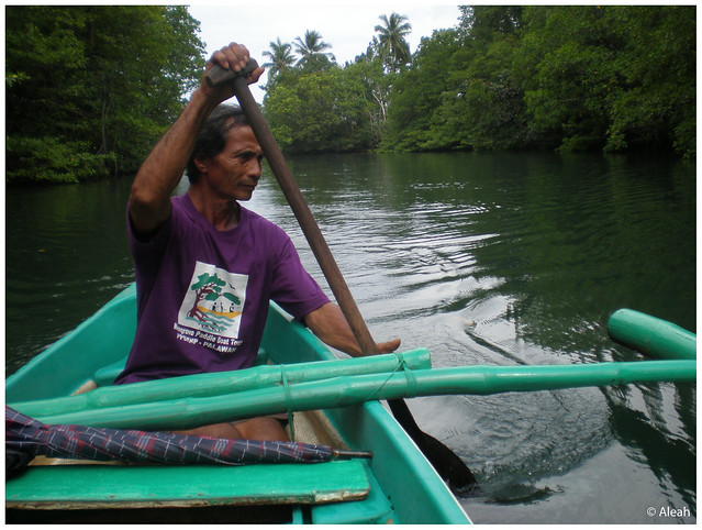 mangrove boatman