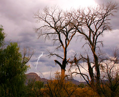 moody weather (Outrageous Images) Tags: autumn trees storm fall colorado moody lightning grandjunction mtgarfield cottonwoodtree outrageousimages davewadsworth