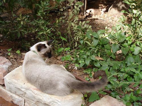 Catschka's tail-swish