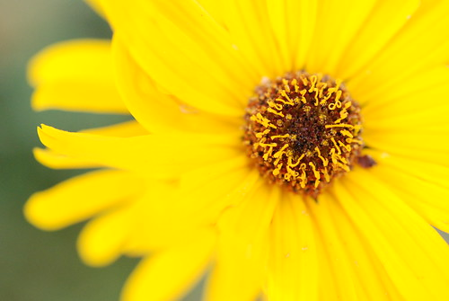 Botanic Garden - 24-10-2009