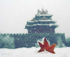 autumnter  (ShanLuPhoto) Tags: china blue autumn winter snow fall grey beijing    blizzard   loolooimage