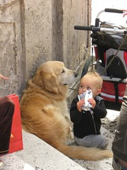 Guardian /Rome (phoxey) Tags: street people italy dog pets rome cute dogs animals candid