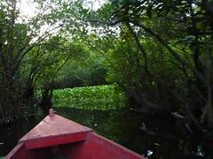 On the mangroves tour.