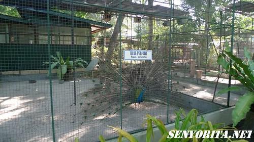 Paradise Island - Samal