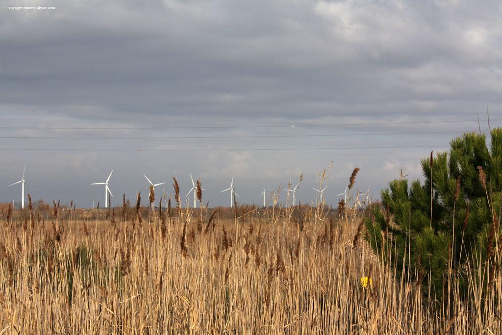 Parc éolien en Camargue