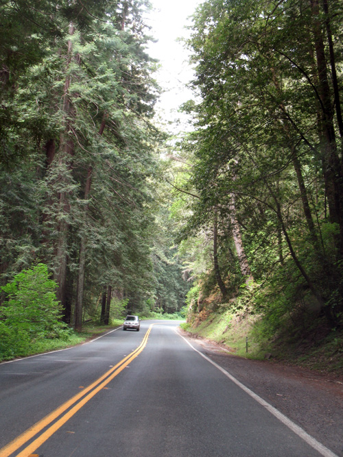 Through the Forest on California 128