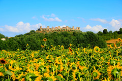 La fortezza e i girasoli / The fortress and the sunflowers (AndreaPucci) Tags: summer italy tower castle italia day torre estate clear sunflowers tuscany siena toscana monteriggioni castello girasoli canoneos400 canonefs1855mm3556 andreapucci