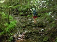 62 - Little East Fork Trail 3