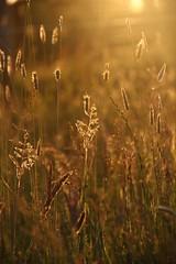 Grass (Jennifer Bradford) Tags: bej citrit 15challengeswinner