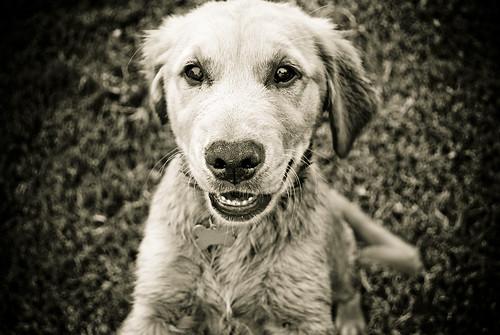 bragg pup b+w