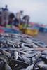 Another catch of the day (IMG0031) (Fadzly @ Shutterhack) Tags: film analog catchycolors malaysia analogue terengganu kualaterengganu fujipro400h bokehgalore my leicar6 fadzlymubin shutterhack negativefilmscan summicronr3520