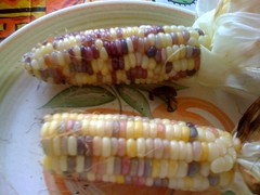 Corn from garden