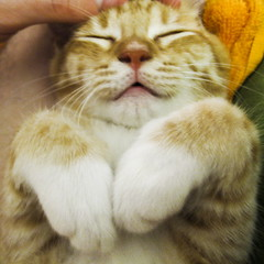 180:365 - halp. i need a name. (cavale) Tags: orange cute cat kitten sam sleep adorable fluffy whiskers sleepy paws project365 wobniar