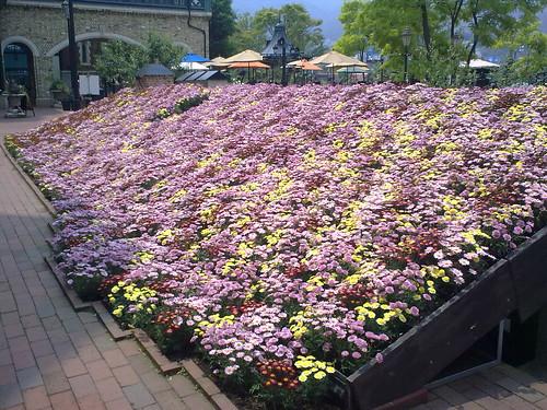 Shiroi Kobito Park-flowers