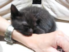 猫カフェのネコの写真12