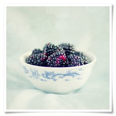 ChinaWhite/BlackBerry (Stuart Stevenson) Tags: china blue red stilllife canon 50mm interestingness dragon blackberry canon300d 14 naturallight bowl stuart explore frontpage blackberries chinablue explorefrontpage interestingness01 explorenumber1 stuartstevenson apinchoftexture explore16jul09 stuartstevenson