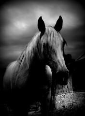 537 Last Day Dream 23 White  Horse