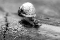 Black & White Snail (jumpers123) Tags: bw macro closeup canon garden snail sigma anawesomeshot