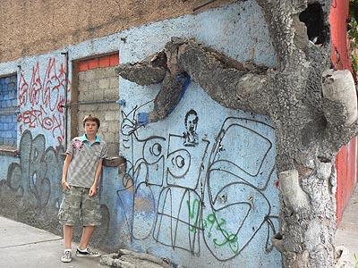 arbre dans le mur tagué.jpg