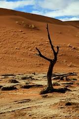 Africa - Namibia / Sossusvlei (RURO photography) Tags:           namib naukluft park dune45 dune7 sanddunes deadvlei desert landscape orange blue namibsky paysage ciel nuage sandcurves sunrise landschaft paesaggio paisagem paisaje vivid color colours colores afrika africa lafric african africain namib namibi namibia sanddne der namib travel reis reizen voyage photos photography kartpostal enstantane rudiroels globalbackpackers lonelyplanet discoveryphoto discoverychannel discoveryexpeditions anawesomeshot voyageursdumonde nationalgeographic fun supershot inspiredelite journalistchronicles tourism tourist woestijn kleuren kleurenpracht loszand worldtrekker nature