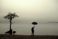Always........... (Nicolas Valentin) Tags: tree rain umbrella scotland scenery explore frontpage lochlomond thattree
