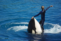 IMGP4926 (vivosi8) Tags: shark dolphin requin sealion 06 parc dauphin killerwhale antibes marineland otarie manchot alpesmaritimes orque