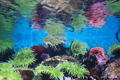 Reflex I (Nuno-Gomes) Tags: life light sea reflection water aquarium mirror interesting fantastic bestof underwater shot lisboa lisbon great best explore greatshot colored oceanarium oceanario nunogomes excelent oceanriodelisboa ilustrarportugal todosabidosmeetingip4outubro mygearandmepremium mygearandmebronze mygearandmesilver mygearandmegold mygearandmeplatinum mygearandmediamond ngomes