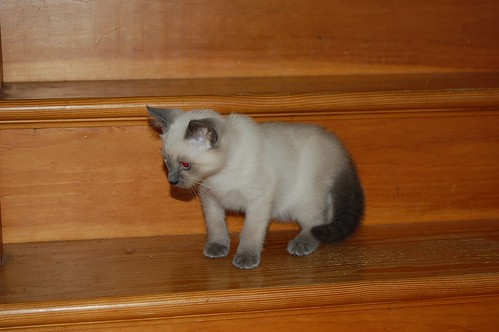cupcake on stairs