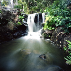 Garden waterfall (art y fotos) Tags: 120 6x6 gardens mediumformat hawaii pinhole fourseasonsresort waterfalls ponds lanai bambole thelodgeatkoele kodak160portranc