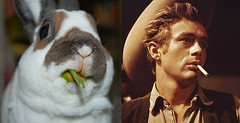 Elliot does his best James Dean (craftybeaver) Tags: pet cute celebrity rabbit bunny green animal james eating dean handsome messy elliot impression slimy dapper sexyrexy minirex