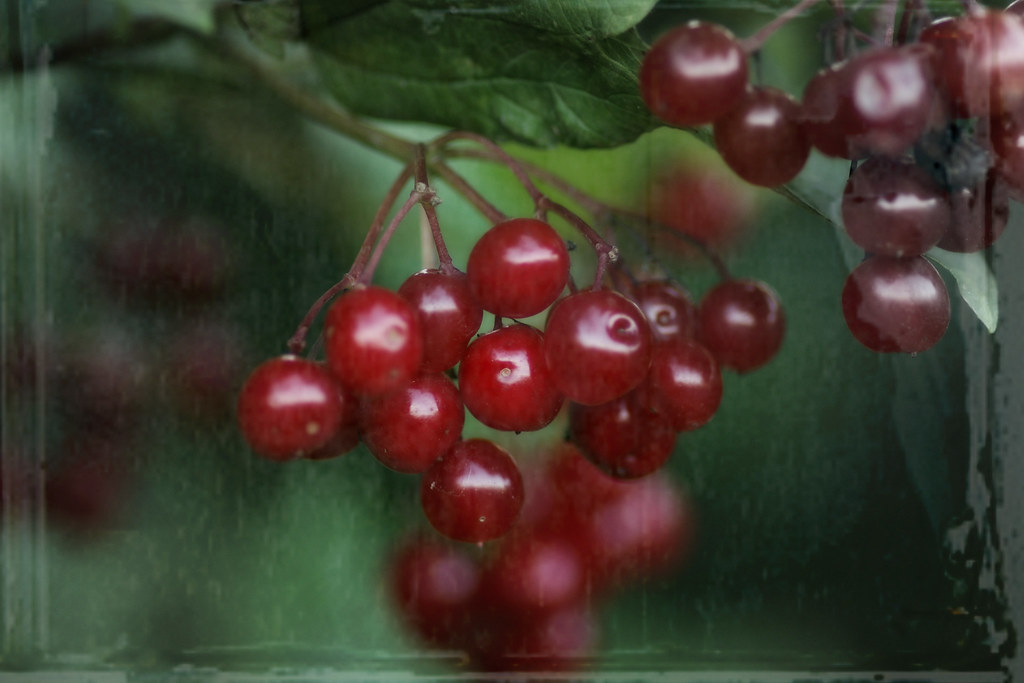 rainy day berries