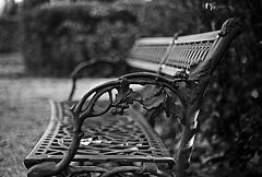 Panchina giardino scotto (Tony Rammaricati) Tags: black film 35mm garden bench dof bokeh pisa kodaktmax400 giardino t70 canonfd bncittà wiithe