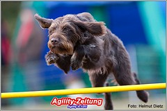 Agility - Deutsch Drahthaar
