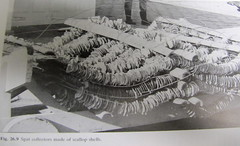 Culture of molluscs
