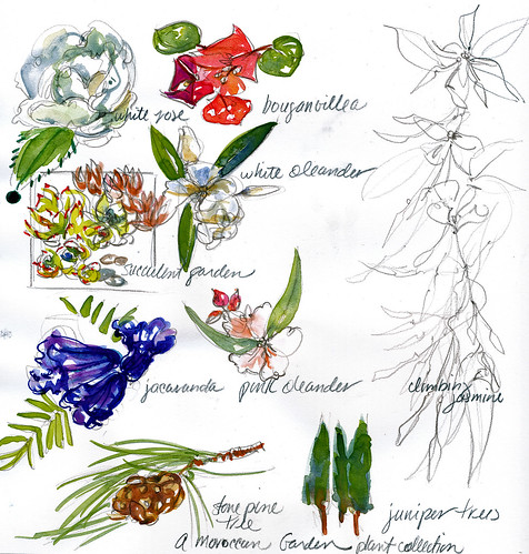 From a Moroccan garden