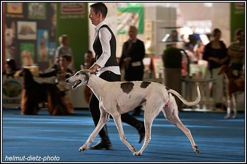 FCI Jahrhundertsieger Ausstellung Dortmund: BOB Greyhound ?