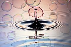 Floating (*Corrie*) Tags: reflection bubble splash waterdrops highspeed watersplash waterdroplet watersculpture liquidart thetimemachine canonef100mmf28macrousm liquidmacro canoneos50d macroart waterdropphotography speedlite580exll speedlite430exll watercollision dripkit corriewhite