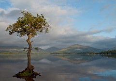 Milarrochy Bay Tree (Ali -1963) Tags: tree reflections dawn scotland nikon lochlomond d5000 milarrochybay landscapelovers milarrochybaytree