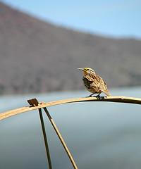 Oh, Little Bird (Jenn (ovaunda)) Tags: sony dsch5 jennovaunda ovaunda