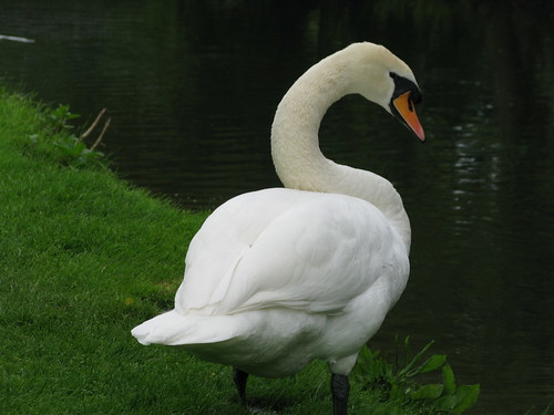"""S"" is for swan"