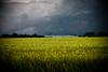 May 26, 2009 (HeatherBradleyPhotography) Tags: cloud storm black green field rain yellow night illinois scary farm wheat country stormy farmland madison land thunderstorm thunder stormnight platinumheartaward thechallengegame challengegamewinner regionwide