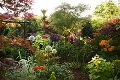 Sunrise in the lower garden - Farewell to spring (Four Seasons Garden) Tags: uk morning bridge flowers red england plants sunlight white west flower colour green english nature beautiful grass leaves yellow marie gardens sunrise garden four spring day all colours azaleas open seasons may picture peaceful competition daily tony palm bee evergreen national fourseasons acer rhododendron yew ericaceae ornamental staffordshire allium newton walsall englishgarden pergola midlands conifer dailymail blackcountry ngs nationalgardenscheme acers fourseasonsgarden charityopendays travelsofhomerodyssey