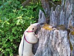 Climbing a stump