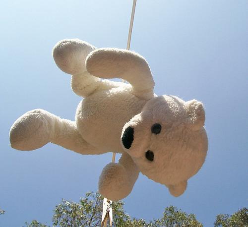 bear drying