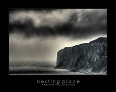 NESTINGPLACE (filter_99) Tags: sea cliff birds clouds moody stormy eastcoast nesting filey reighton