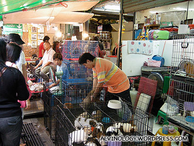 The pet zone in Chatuchak
