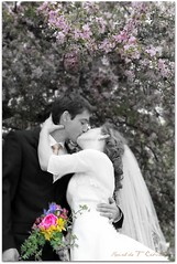 A Kiss (Ronaldo F Cabuhat) Tags: flowers trees wedding people woman man art love beautiful beauty photography was groom bride veil emotion creative picture like pic images romance lovers special suit kanji frame passion devotion cherryblossom romantic aww sakura ay lovely lovestory depth boquet picnik necktie brideandgroom selectivecolor springflower tiltshift weddingphotography akiss blacksuit springwedding canonefs1755mmf28isusm canoneos50d malonegolfclub pinoykodakero flowerboquet cabuhat