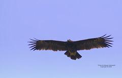 Stability (CLICK GROUP   Moeen) Tags: nikon saudiarabia  jazan gizan      d40x  thewonderfulworldofbirds