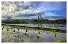 Rice Farms & Climate Change? ([ Rodelicious ]) Tags: trip travel light vacation sky plants sun plant color colour reflection art beach nature beautiful beauty smile clouds contrast photoshop canon landscape geotagged photography photo exposure dof rice photos farm philippines pk canoneos climatechange hdr highdynamicrange hdri blending waterscape rodel methane sigma1020mm marinduque boac mabuhay photomatix tonemap canon400d canonxti colorphotoaward aplusphoto pinoykodakero colourartaward perfectescapes rodelicious vosplusbellesphotos ifolio garbongbisaya rodeljoselitomanabat gettyimagesphilippinesq1 gettyimagesasia gettyimagesphilippines