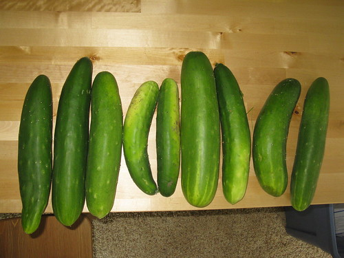 1 day of cucumber haul